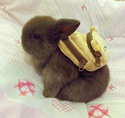 Hermoso conejo con mochila