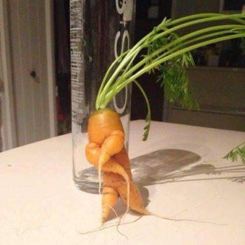 zanahoria mamey