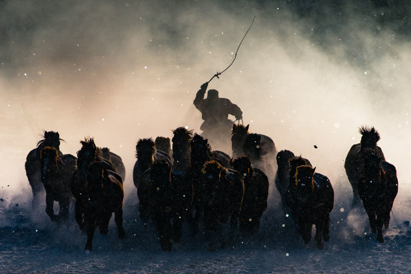 Fotos ganadoras - Anthony Lau - Winter Horseman