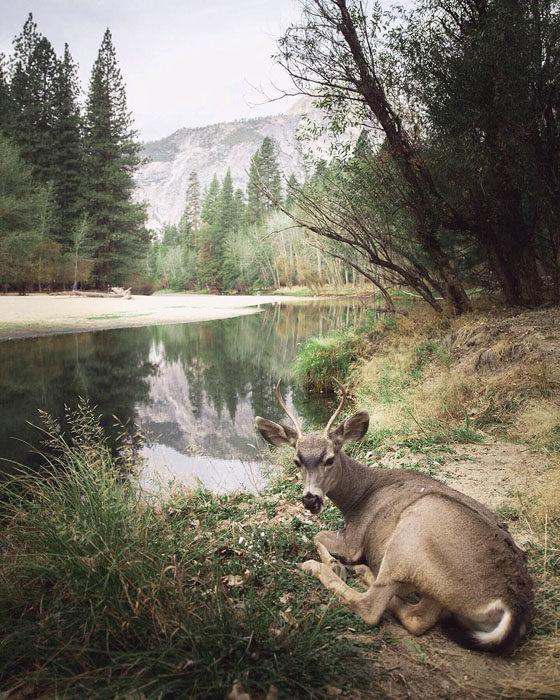 Konsta Punkka fotografias de animales silvestres 11