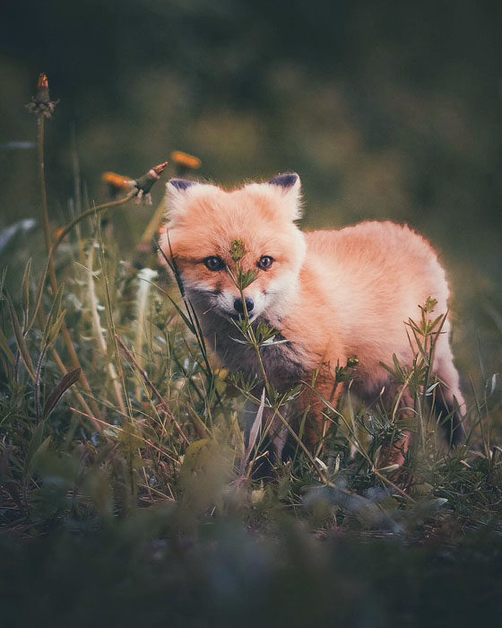 Konsta Punkka fotografias de animales silvestres 12