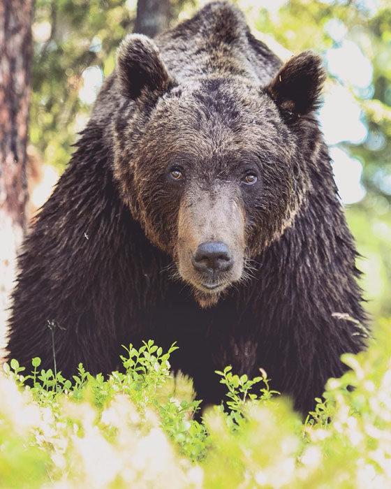 Konsta Punkka fotografias de animales silvestres 13