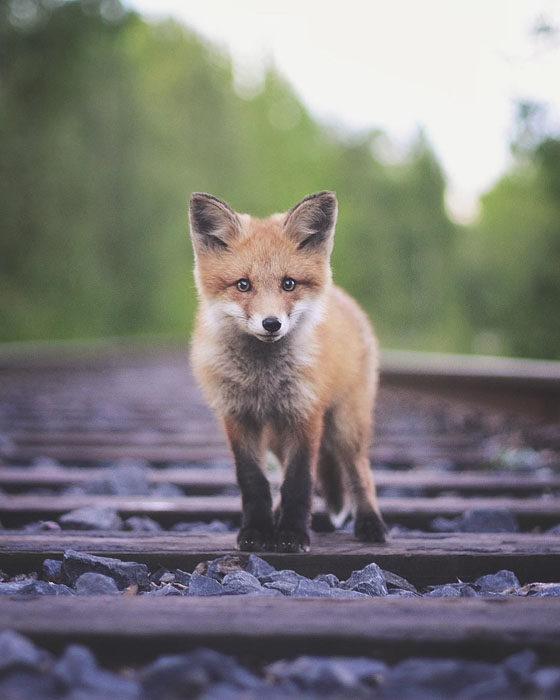 Konsta Punkka fotografias de animales silvestres 14
