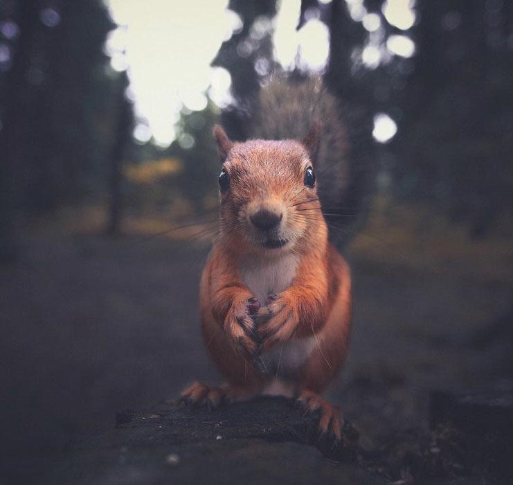 Konsta Punkka fotografias de animales silvestres 3