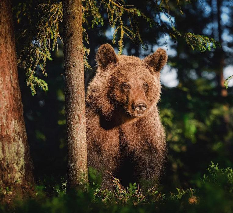 Konsta Punkka fotografias de animales silvestres 4