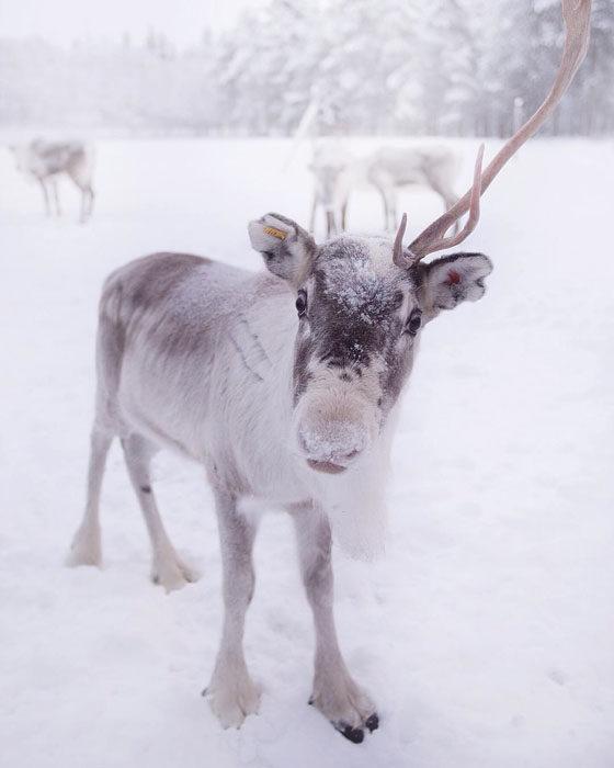 Konsta Punkka fotografias de animales silvestres 6