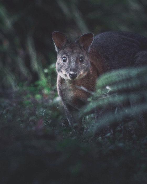 Konsta Punkka fotografias de animales silvestres 8