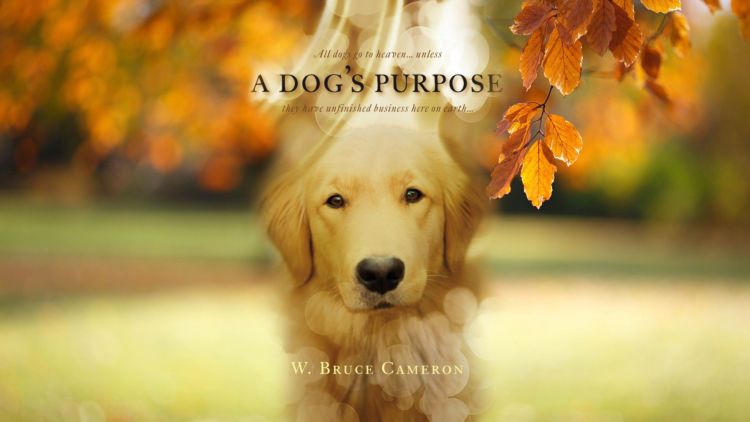 Trailer de A Dog's Purpose
