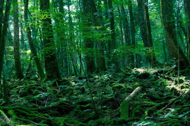 Bosques de los suicidios Japón