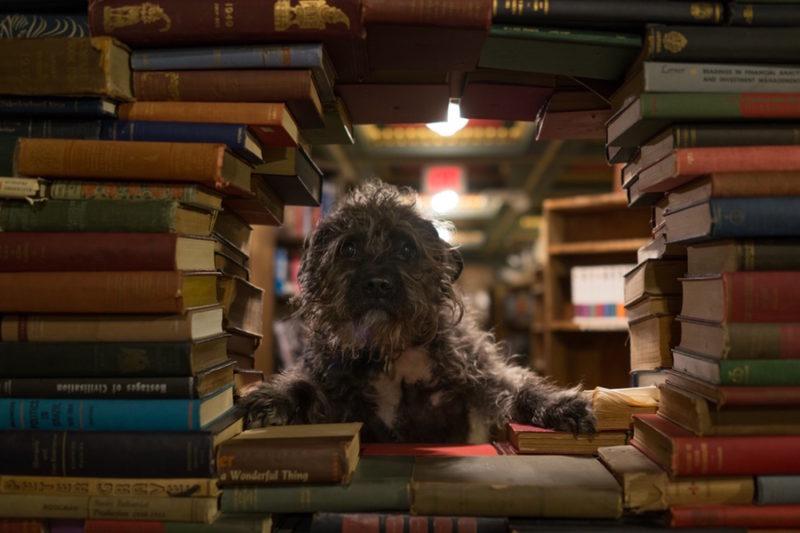 Divertida sesión de fotos fotografo Mik Milman perro 7