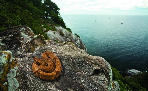 Isla de las serpientes brasil