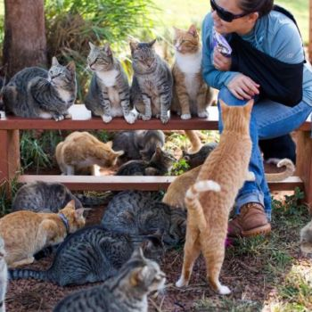 Lanai Cat Sanctuary 2
