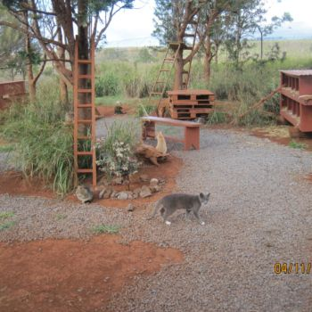 Lanai Cat Sanctuary 8