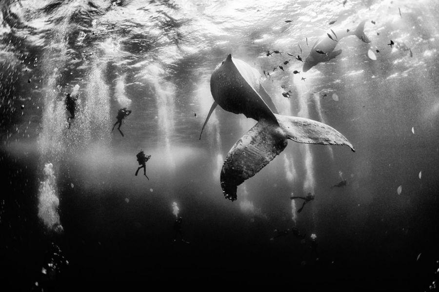 Susurro de ballena