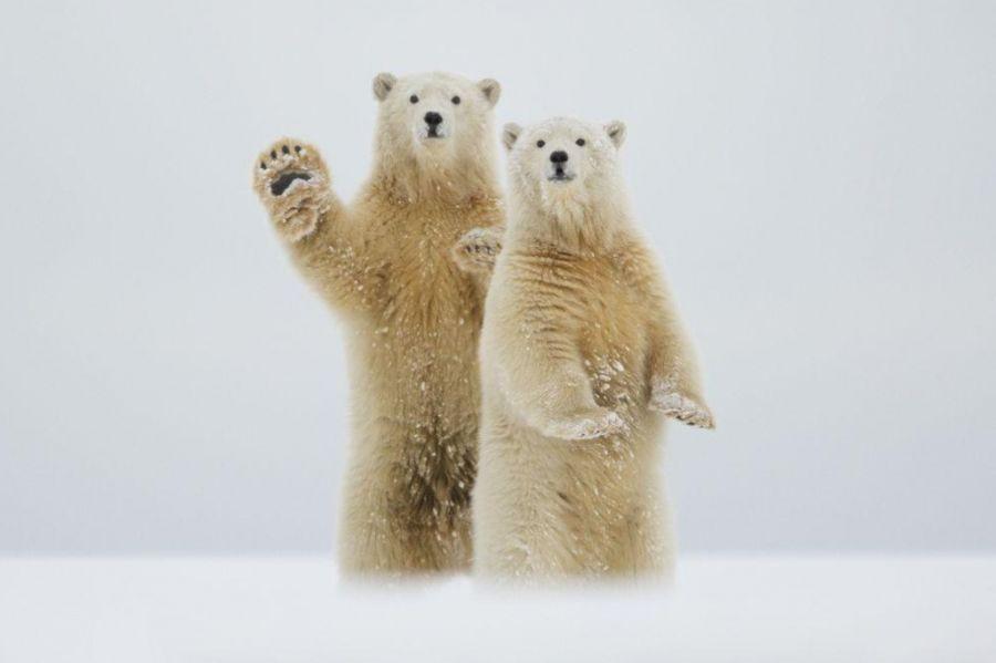 Un Saludo del Artico