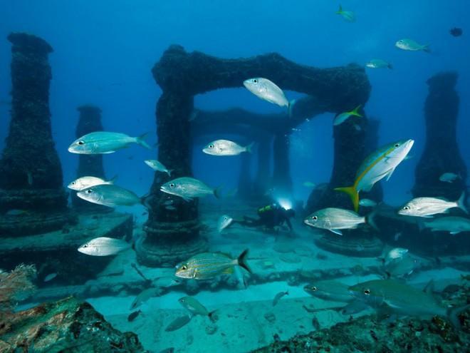 25-increibles-ejemplos-fotografia-submarina-s-L-_1TmZZ