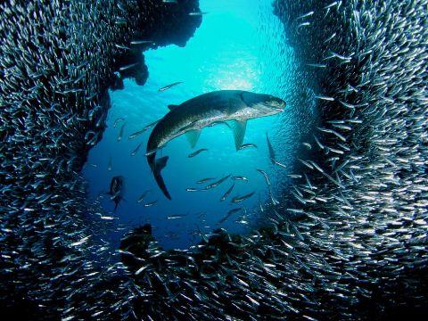 30-Increíbles-Fotografías-Submarinas-5