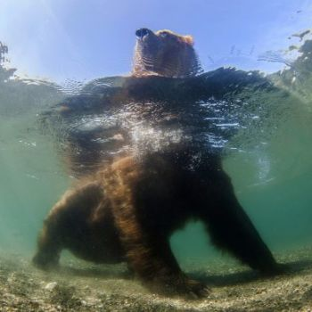 Mike Korostelev - National Geographic Nature Photographer 2016