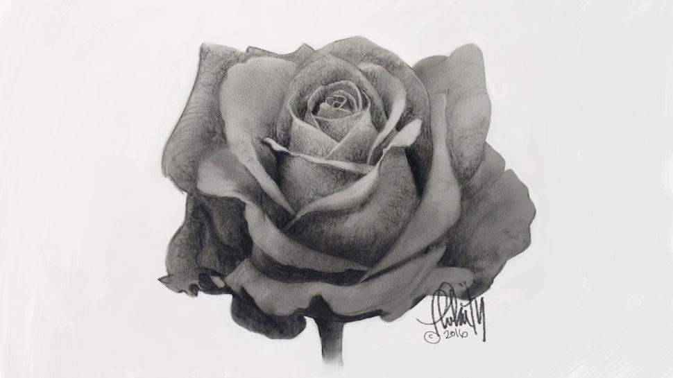 aprender a dibujar una rosa realista