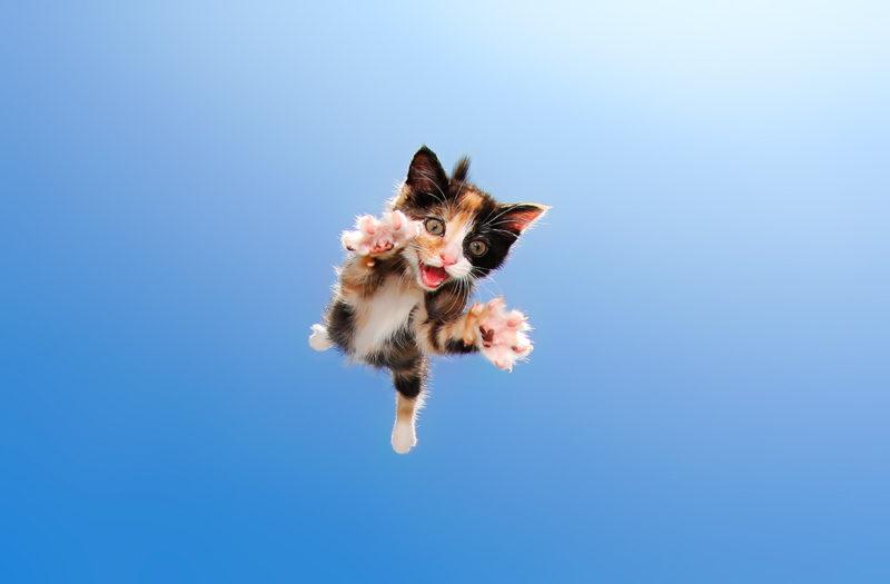 retratos de gatitos
