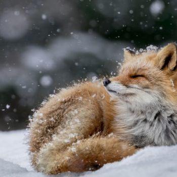 Hiroki Inoue - National Geographic Nature Photographer