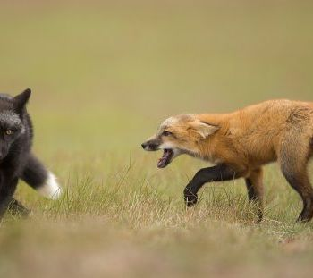 Henrik Nilsson - National Geographic Nature Photographer