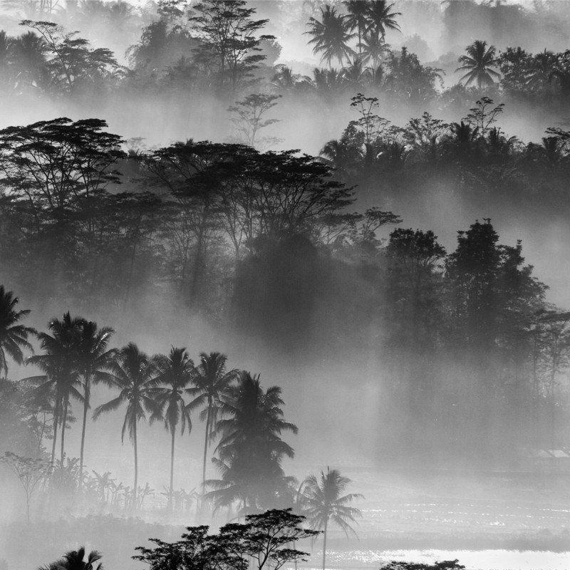 bosque sumergido en la niebla