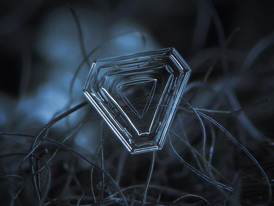 Ejemplos de macrofotografía por Alexey Kljatov