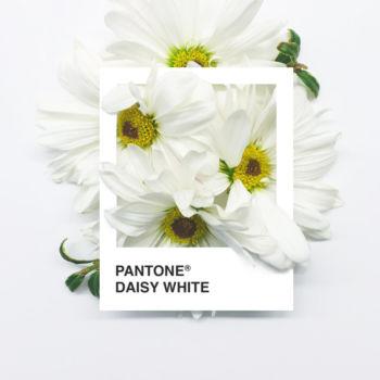 Pantone Flowers (1)