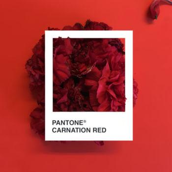 Pantone Flowers (10)