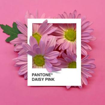 Pantone Flowers (11)