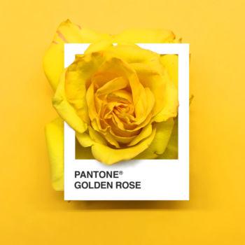 Pantone Flowers (2)