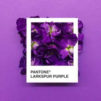 Pantone Flowers (3)