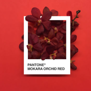 Pantone Flowers (4)