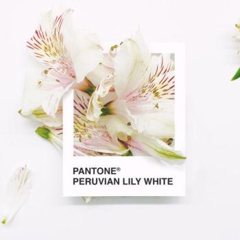 Pantone Flowers (5)