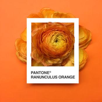 Pantone Flowers (6)