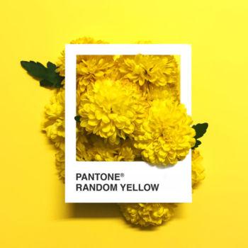 Pantone Flowers (7)