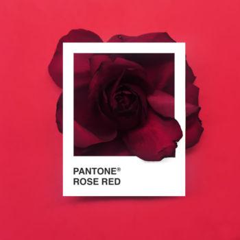 Pantone Flowers (8)