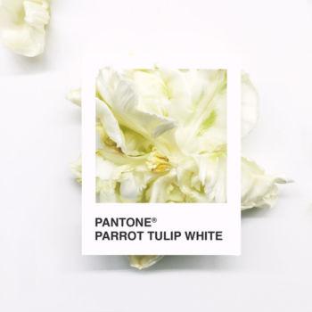 Pantone Flowers (9)