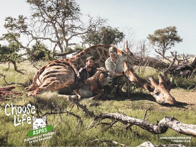 Campaña gráfica contra la caza furtiva