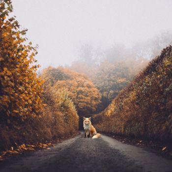 Fotografias surrealistas por Ted Chin (2)