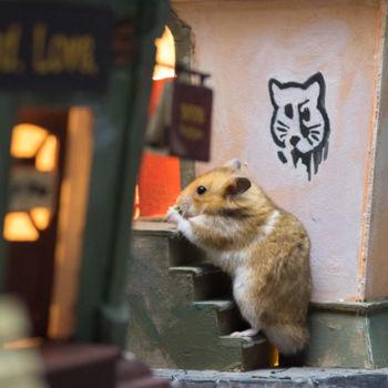 Hamster City (21)