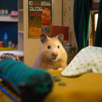 Hamster City (7)
