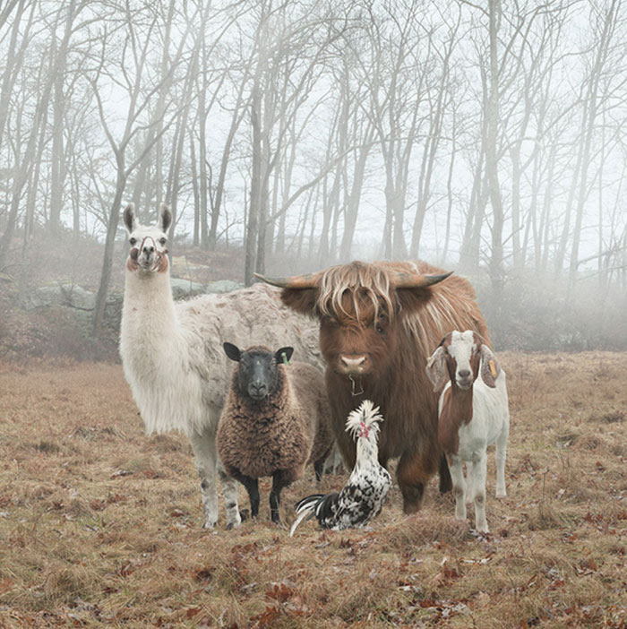 Divertidas fotografías de animales