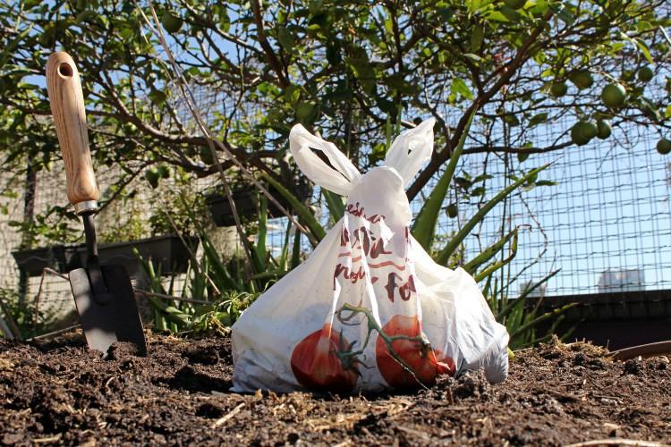 bolsas biodegradables para sembrar nueva vida (3)