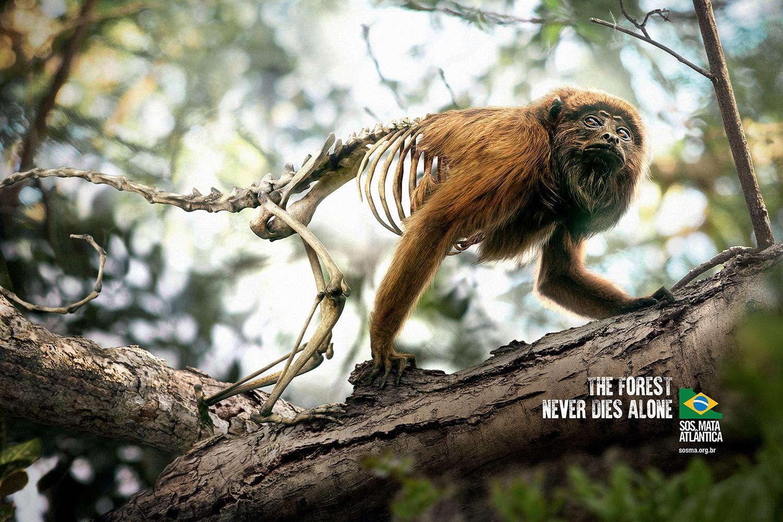 Campaña gráfica contra la destrucción forestal