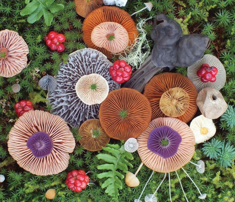 Coloridas fotografías de hongos