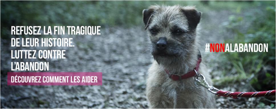 Conmovedora campaña contra el abandono animal