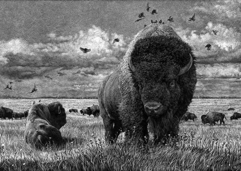 Ilustraciones de animales en blanco y negro