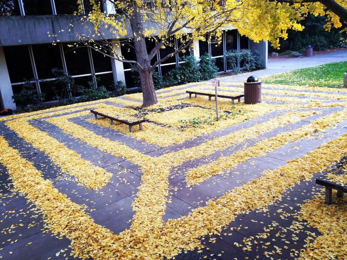 Land Art con hojas muertas por Joanna Hedrick - Frogx Three